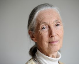 Dr Jane Goodall - Interesting Ideas